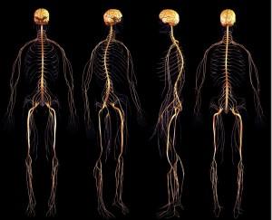 3d-nervous-system-bryan-brandenburg